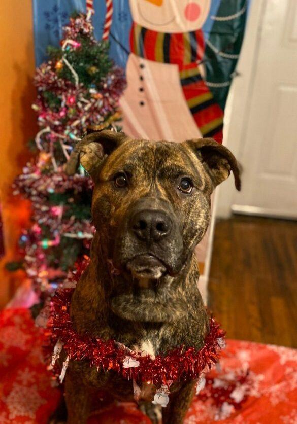 Chief Christmas